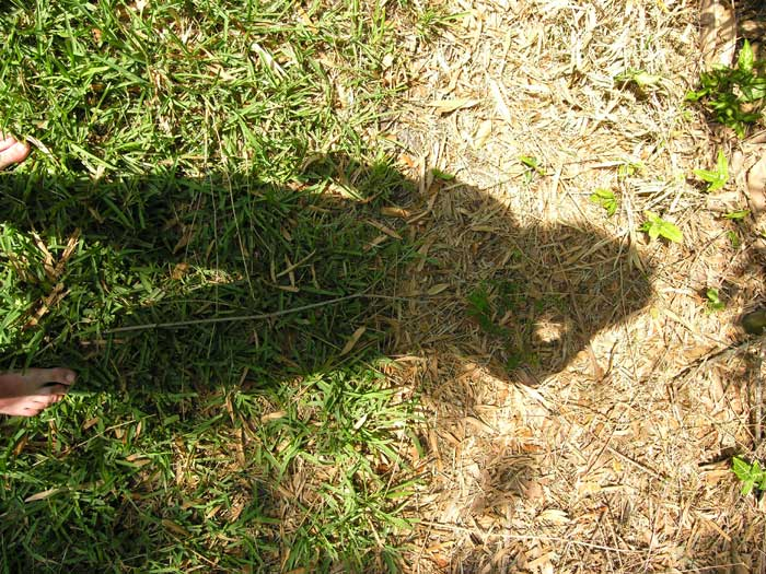 Image looking down on grass with the shadow of the photographer| All rights reserved by the image creator: Sean Mallon. Copyright 2006.